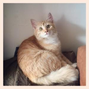 Pembasmi Kutu Dan Jamur Kucing Alami