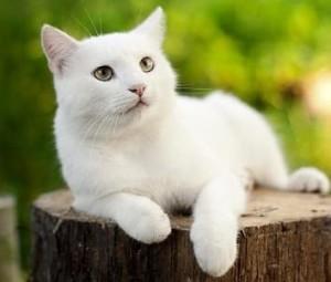 Obat Kutu Untuk Kucing Aman dan Hemat