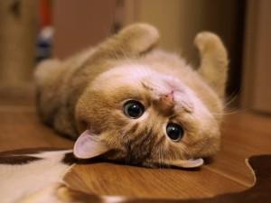 Pembasmi Kutu Dan Jamur Kucing Hemat