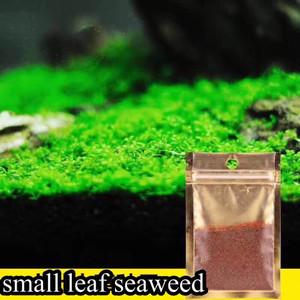 Small Leaf Grass Carpet Seed - Tanaman Aquascape