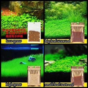 Carpet Seed Bibit Benih Tanaman Aquascape