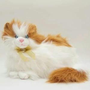 Unduh 92+  Gambar Gambar Kucing Anggora Lucu Paling Imut HD