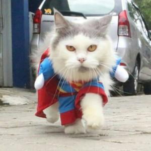 Unduh 97+  Gambar Kucing Lucu Banget Paling Lucu