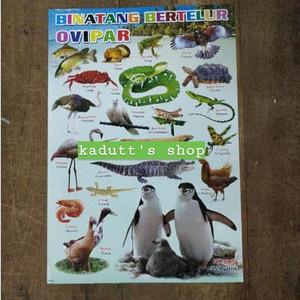 Jual Poster Edukasi Binatang Hewan Bertelur Ovipar Mainan Murah