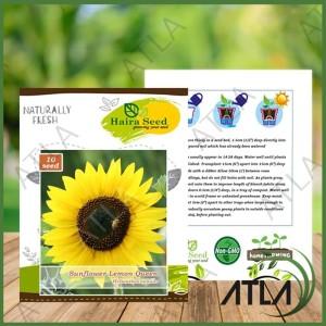 Jual Bibit 10 Biji Benih Bunga Matahari Sunflower Lemon Queen Haira Seed Kota Surabaya Atla Surabaya Tokopedia