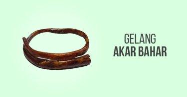 Gelang Akar Bahar Lampung