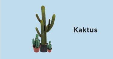 Kaktus Cianjur