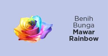 Benih Bunga Mawar Rainbow