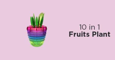 10 in 1 Fruits Plant