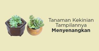 Succulent Bandung