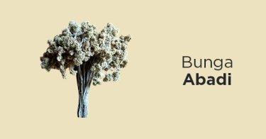 Jual Bunga Edelweis Bunga Abadi Harga Murah Tokopedia