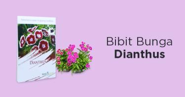 Bibit Dianthus