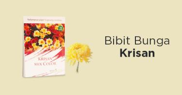 Bibit Krisan