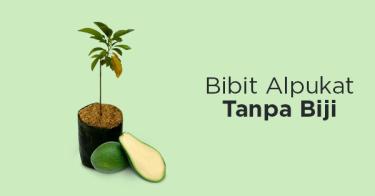 Bibit Alpukat Tanpa Biji Kabupaten Kediri