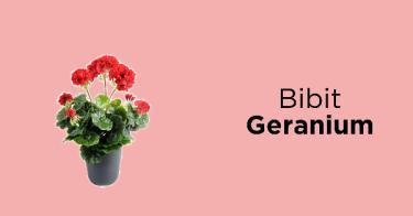 Bibit Geranium