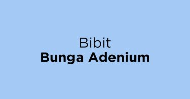 Bibit Bunga Adenium Metro
