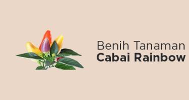 Benih Cabai Pelangi