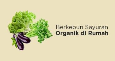 Bibit Sayuran Organik