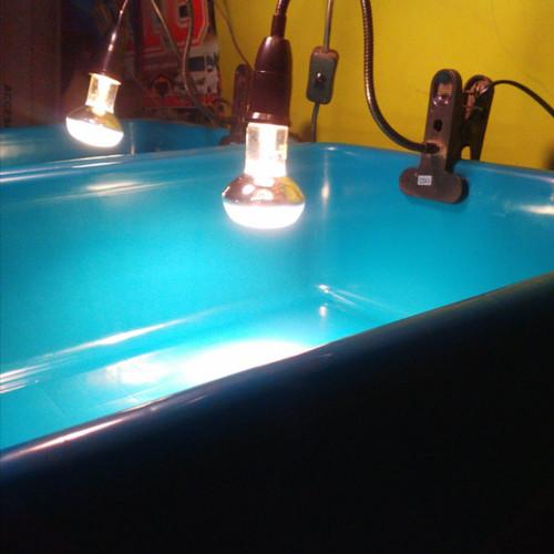 Foto Produk Fiting lampu reptile + Exoterra Intense Basking Spot 50watt dari Fortune Torto