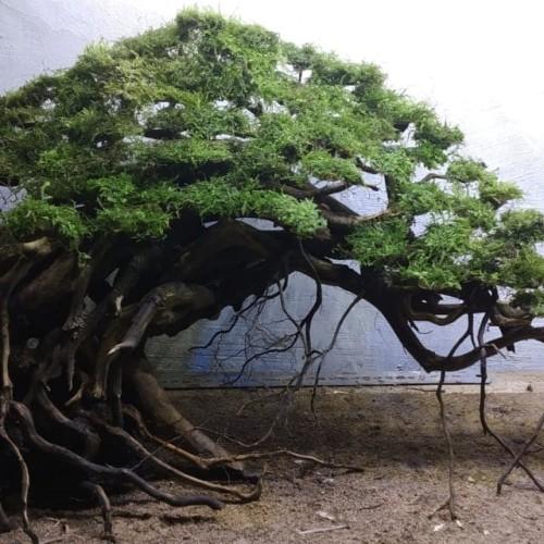 Pohon Beringin Hd Belajar