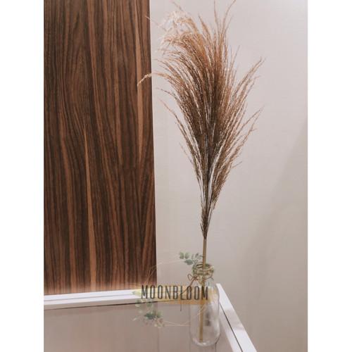 Foto Produk Bunga Kering Pampas Coklat Dried Flower Rustik Dekorasi Vintage Murah - Cokelat Tua dari Daily Supply Store