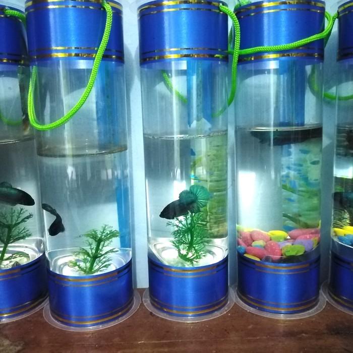 Jual Aquarium Mini Ikan Cupang Jakarta Utara Al Fatih Coleksion Tokopedia