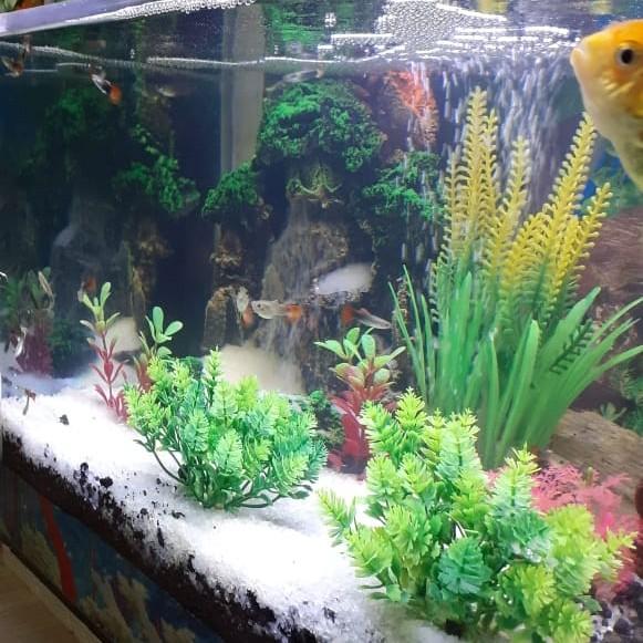 Jual Aquarium Aquascape Full Set Jakarta Barat Alif Aquascape Tokopedia