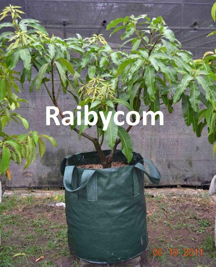Foto Produk Planter Bag 150 Liter Easy Grow Jumbo Planterbag Pohon Buah Besar dari Raibycom