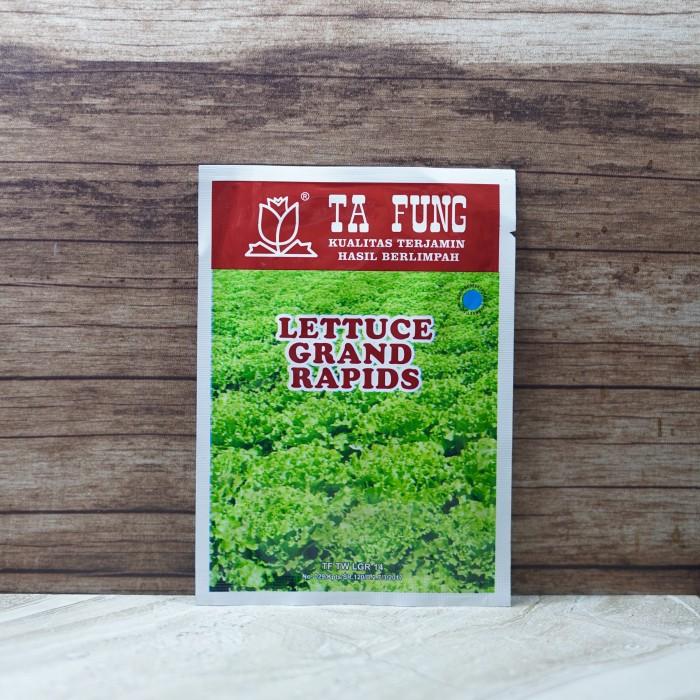 Foto Produk Benih Lettuce Selada Keriting Grand Rapids Ta Fung 10gr dari HIDROPONIK Manado