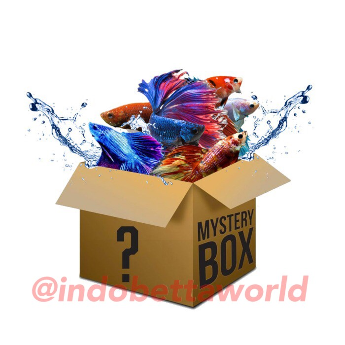 Jual Mistery Box Ikan Cupang, Cupang Nemo, Cupang ...