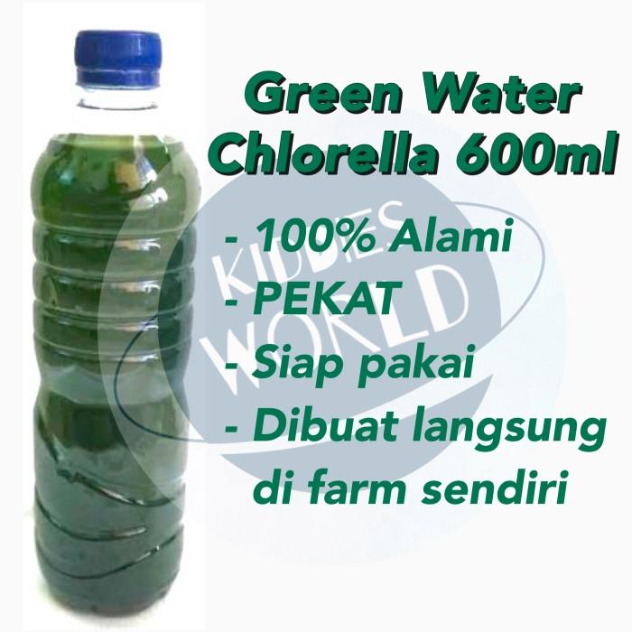 Jual Green Water Chlorella Air Hijau Pakan Kutu Air Daphnia Artemia Jakarta Barat Kiddies World Tokopedia