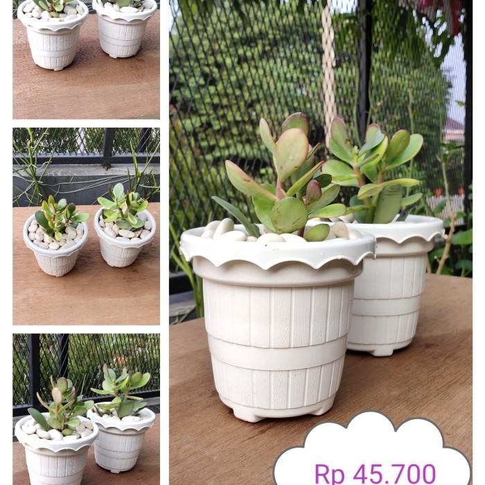 Jual Bunga Pot Kecil Putih Kota Depok Dhesyadarru B17 Tokopedia
