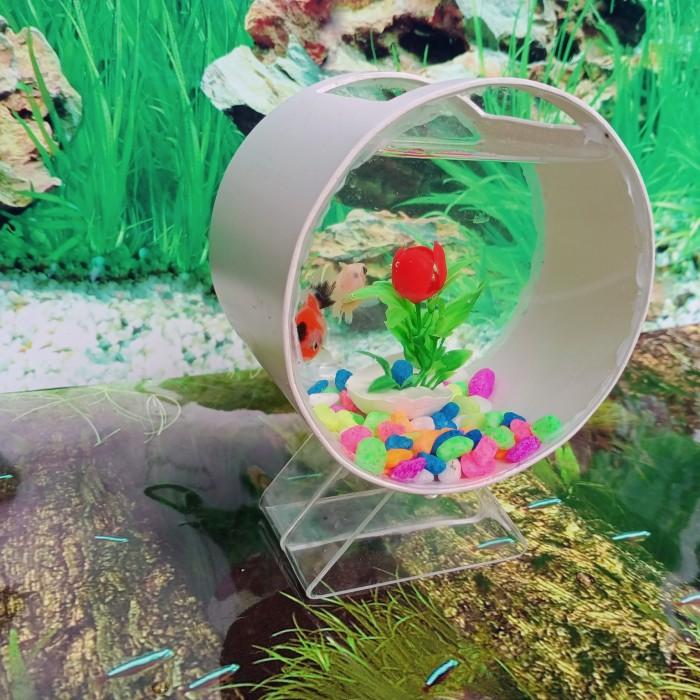 Jual Aquarium Ikan Cupang Bulat Unik Kota Bandung Mini Unik Tokopedia