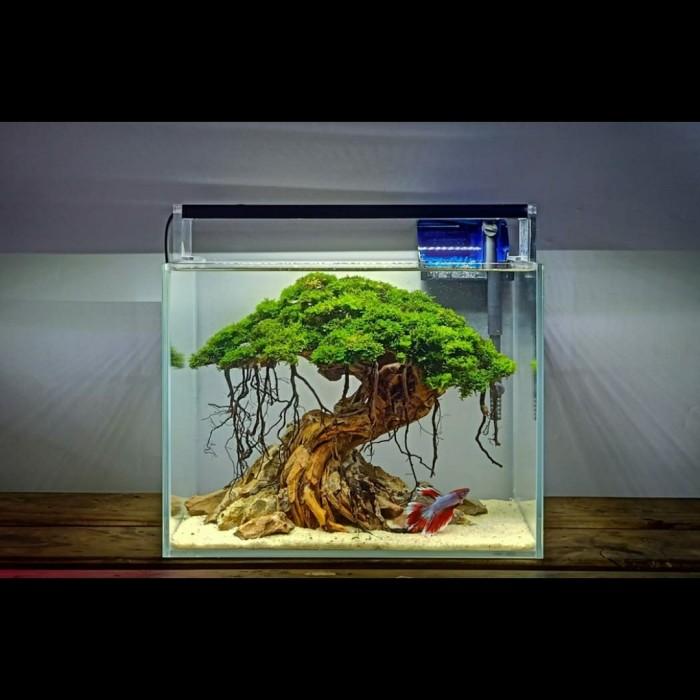 23 Nano Aquascape Natural Images Teknologi Dan Alamiah