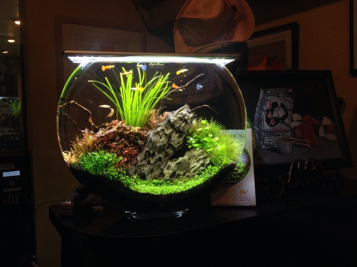 Jual Aquarium Bulat Kota Bandung Jacksaws Tokopedia