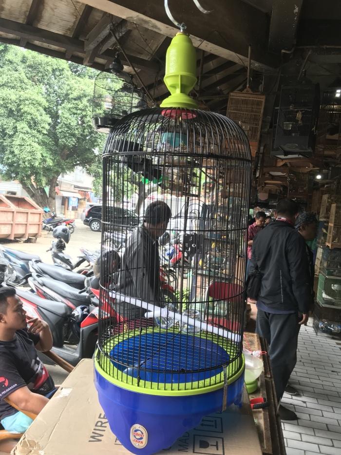 harga Sangkar lovebird ebod jaya tebok murmer blue edition Tokopedia.com