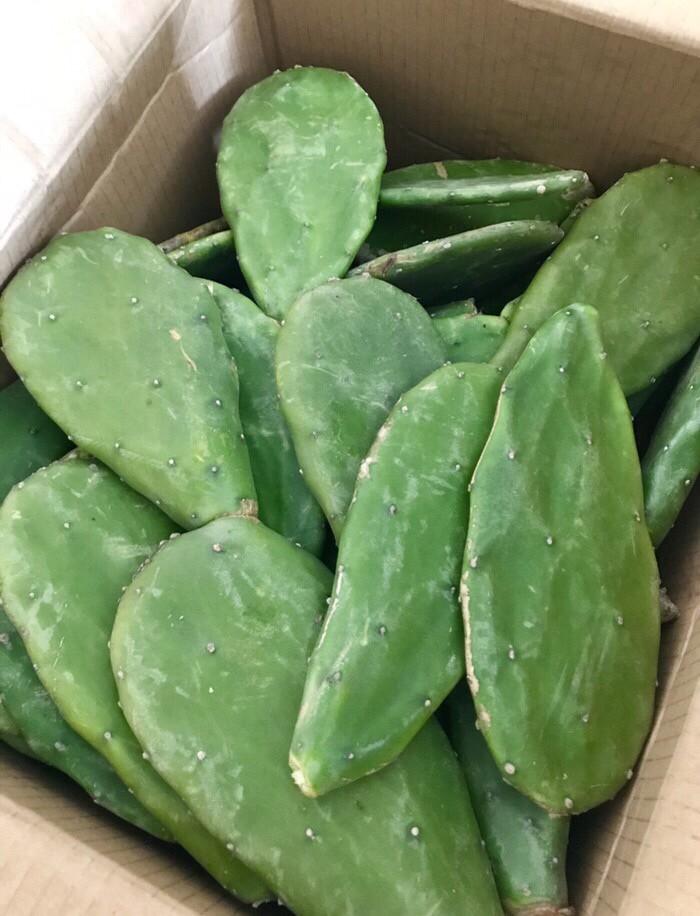 harga Kaktus centong segar/makanan tortoise/kura kura darat 1 buah (bibit) Tokopedia.com