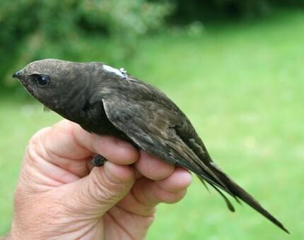 Jual Burung Walet Kota Surabaya Koloni Walet Toko Walet Tokopedia