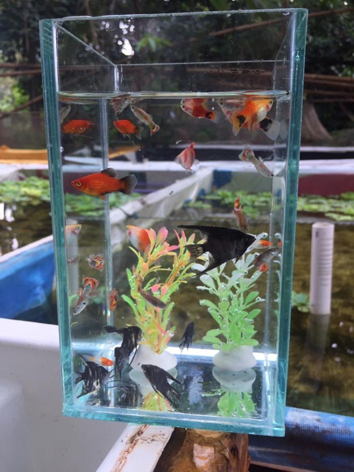 Jual Paket Aquarium Kecil Aquarium Kecil Aquarium Mini Soliter Ikan Cupang Kab Bekasi Dhollog Fish Tokopedia