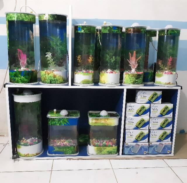 Jual Aquarium Mini Ikan Hias Cupang Guppy Bisa Lampu Tidur Dan Mesin Kab Bekasi Vannyindahstore 25 Tokopedia