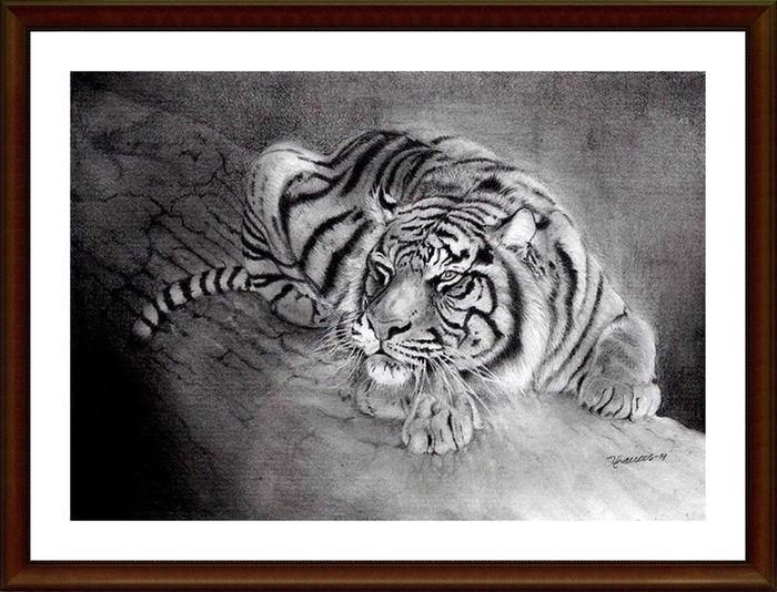 Jual Lukisan Pencil Harimau A3 Kertas Sketch Book Kota