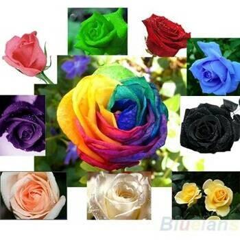 Jual Benih Bibit Biji Bunga Mawar Campur Warna Warni Rose Mix Kota Kendari T A M I M A Tokopedia