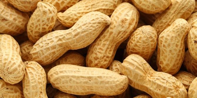Biji Benih Bibit Kacang Tanah Peanut Cabut Glongdongbrkulit