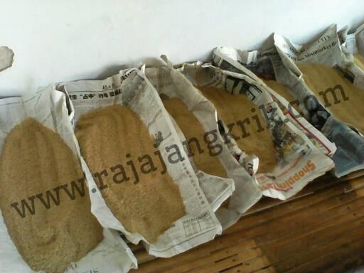 Foto Produk Telur Jangkrik Seliring / Alam dari Rajajangkrik