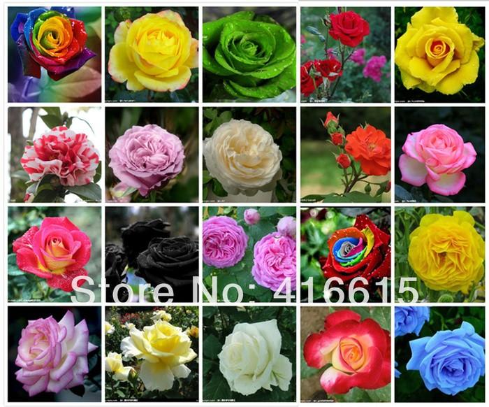 Jual Bibit Benih Biji Bunga Mawar Rose Mix 20 Jenis Kota Semarang Jogja Florist Tokopedia