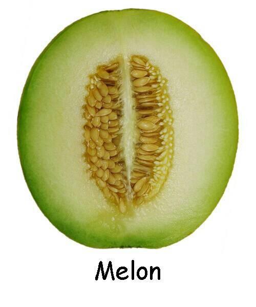 jual benih biji buah melon import jakarta barat