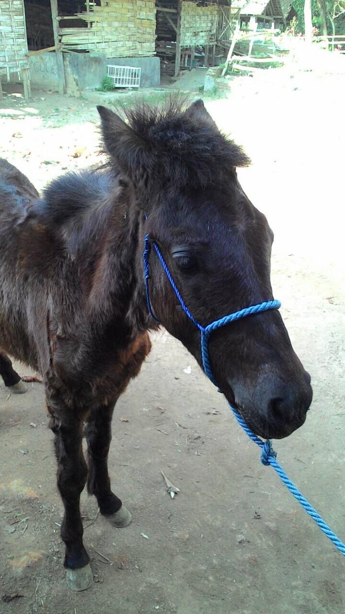 jual anak kuda kota malang nisrina shop tokopedia rh tokopedia com