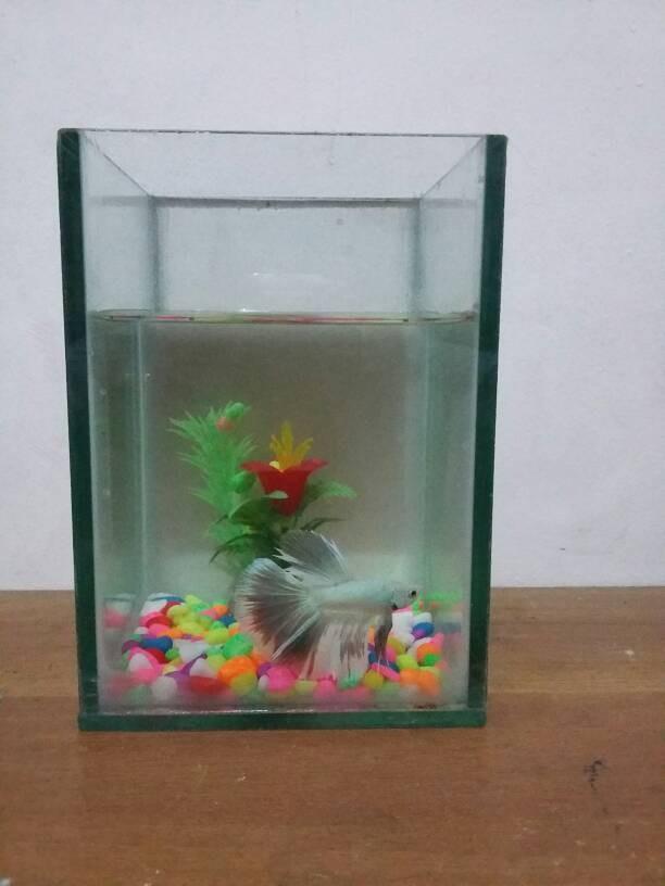 Hiasan Aquarium Ikan Cupang