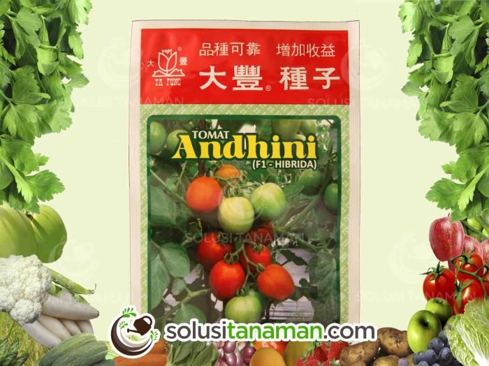 Info Bibit Sayuran Organik Travelbon.com