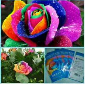 Download 92+ Gambar Bunga Warna Warni Keren Gratis